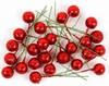 Obrázek Cesmína ovoce - výška 12 / červená glitter, 24 ks